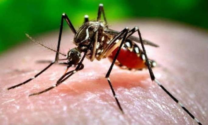 Cứ hôn môi, đừng sợ lây nhiễm virus Zika! - Ảnh 1.