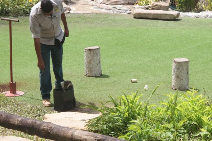 Mãn nhãn với màn biễu diễn thú ở Safari Phú Quốc - Ảnh 7.