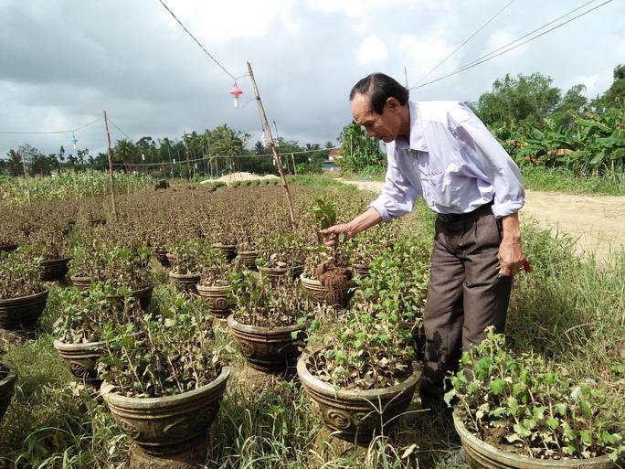 Thủ phủ hoa tết Quảng Ngãi và Quảng Nam tiêu điều sau lũ dữ - Ảnh 6.