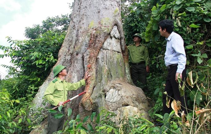 Dồn sức giữ rừng: Chặn bước lâm tặc - Ảnh 2.
