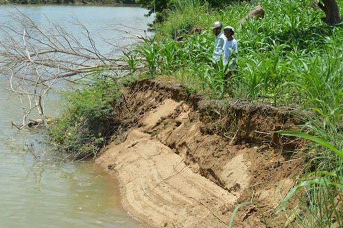 """Nhiều diện tích cây trồng của người dân huyện Krông Nô trôi dần xuống dòng """"sông cha"""" do khai thác cát bừa bãi"""