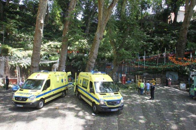 Cây trăm tuổi ngã trong lễ hội, đè chết 12 người - Ảnh 3.