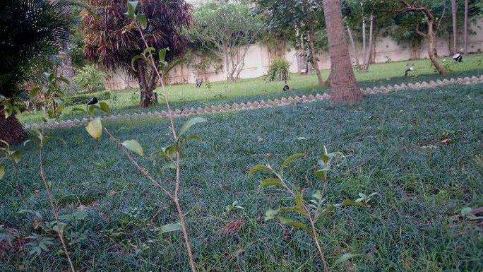 Khu vườn bí mật trong Đại sứ quán Pháp ở Hà Nội - Ảnh 8.
