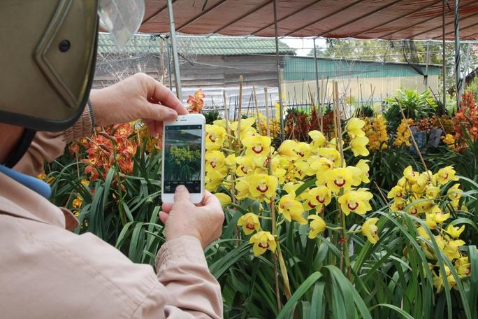Địa lan vàng tuyệt đẹp made in Đà Lạt có giá 800.000 đồng/cành.