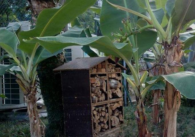 Khu vườn bí mật trong Đại sứ quán Pháp ở Hà Nội - Ảnh 6.
