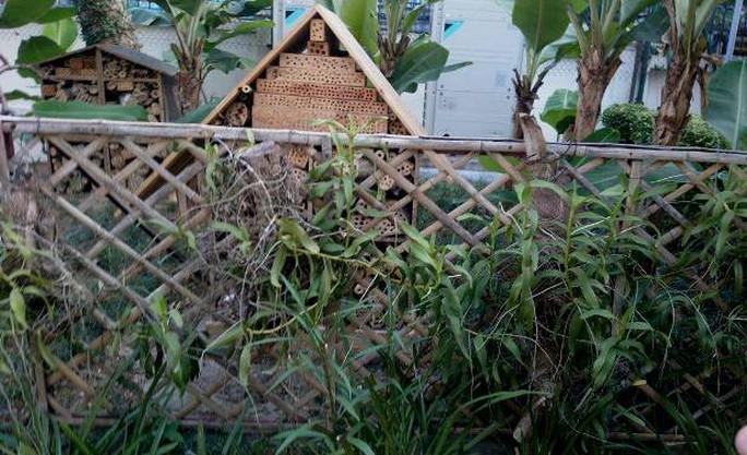 Khu vườn bí mật trong Đại sứ quán Pháp ở Hà Nội - Ảnh 7.