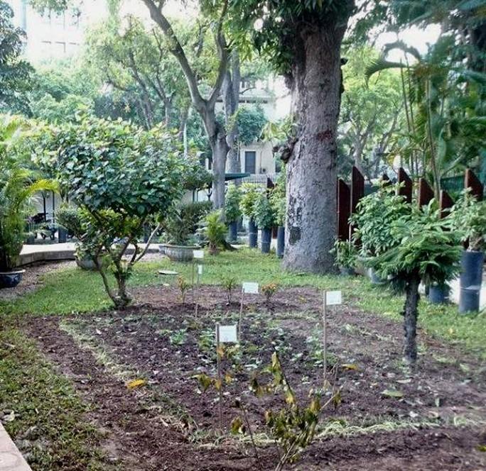 Khu vườn bí mật trong Đại sứ quán Pháp ở Hà Nội - Ảnh 12.