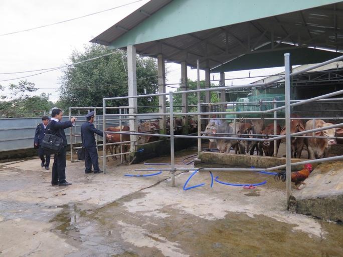 Hầu hết các cơ sở đều từng bị xử phạt vì có hành vi bơm nước vào bò nhưng mức phạt không đủ sức răn đe