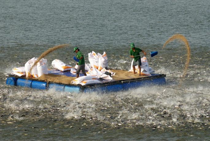 Những hình ảnh đẹp về cá tra từ ao nuôi đến nhà máy - Ảnh 5.