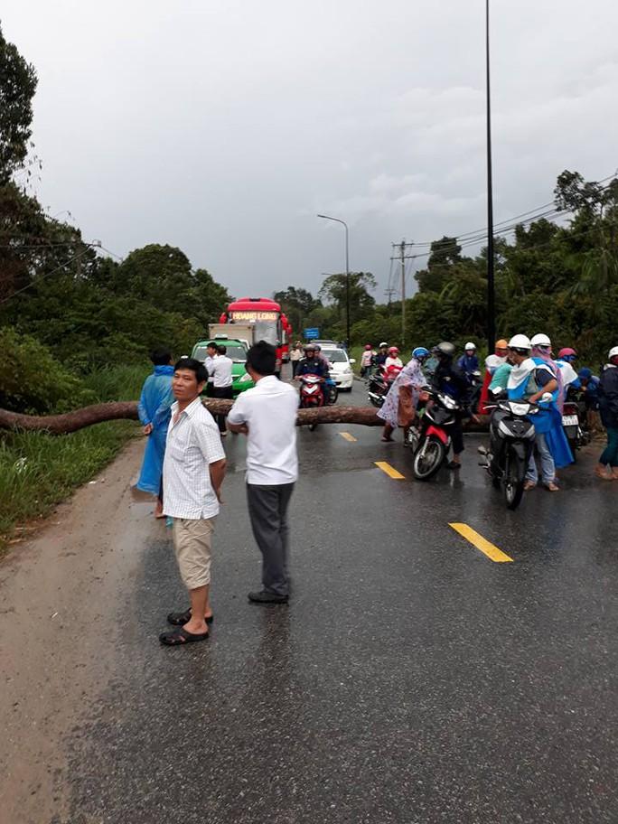 Cây to ngã chắn ngang đường ở Phú Quốc - Ảnh 2.
