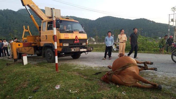 Tông chết bò đang gặm cỏ bên đường, tài xế phải đền 38 triệu đồng - Ảnh 1.