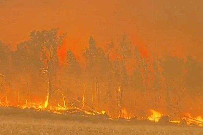 38 vụ cháy ở bang New South Walesnằm ngoài tầm kiểm soát. Ảnh: 7 News