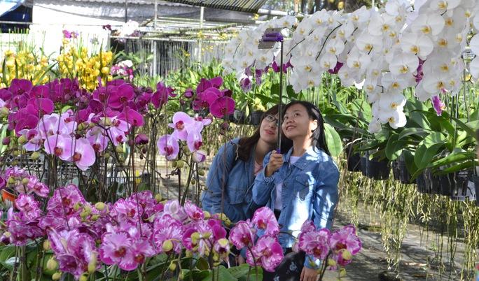 Nhiều bạn trẻ thích chụp ảnh bên những đóa hoa rực rỡ