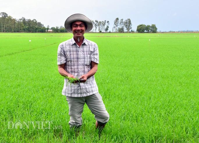 Anh nông dân có biệt tài nhìn trời đoán bệnh lúa - Ảnh 1.