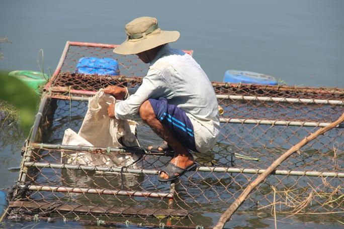 Cá nuôi trên sông Bồ chết hàng loạt, người dân trắng tay - Ảnh 1.