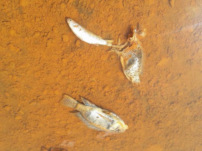 Sông Cu Đê lại tiếp tục đục ngầu nghi do nhà máy xả thải - Ảnh 2.
