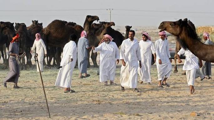 Qatar: Hàng trăm lạc đà chết vì khủng hoảng với Ả Rập Saudi - Ảnh 1.