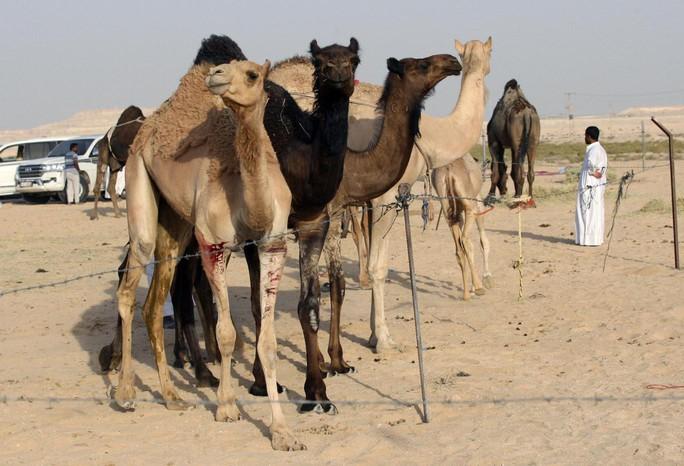 Lạc đà của Qatar cũng bị... trục xuất - Ảnh 1.