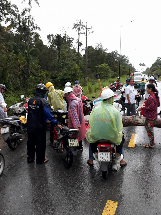 Cây to ngã chắn ngang đường ở Phú Quốc - Ảnh 1.