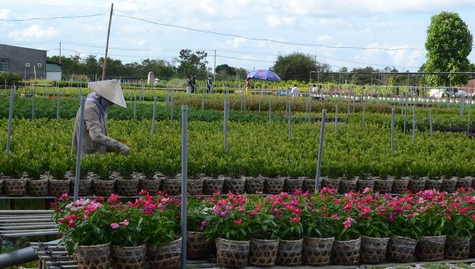 Khách du lịch sẽ có dịp trải nghiệm về cách trồng, chăm sóc hoa của người dân Sa Đéc