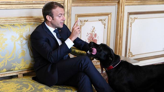 Chó cưng của tổng thống Pháp làm 3 quốc vụ khanh bó tay - Ảnh 2.