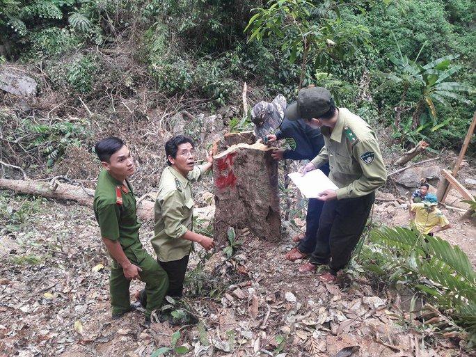 Phá rừng khi chưa được phép khai thác khoáng sản - Ảnh 1.