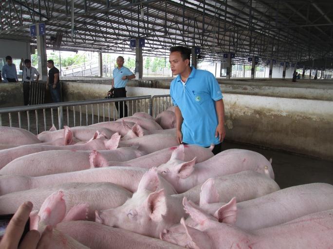 Đừng nên chờ thị trường Trung Quốc cứu thịt heo - Ảnh 1.