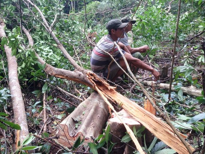 Phú Yên nuốt hàng loạt rừng - Ảnh 1.