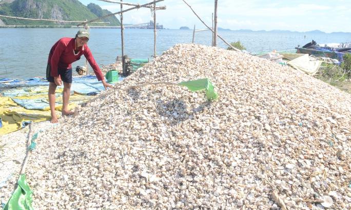 Vụ hải sản chết bất thường: Có hiện tượng tảo nở hoa - Ảnh 3.