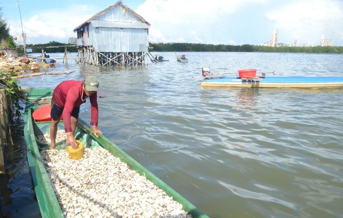 Vụ hải sản chết bất thường: Có hiện tượng tảo nở hoa - Ảnh 2.