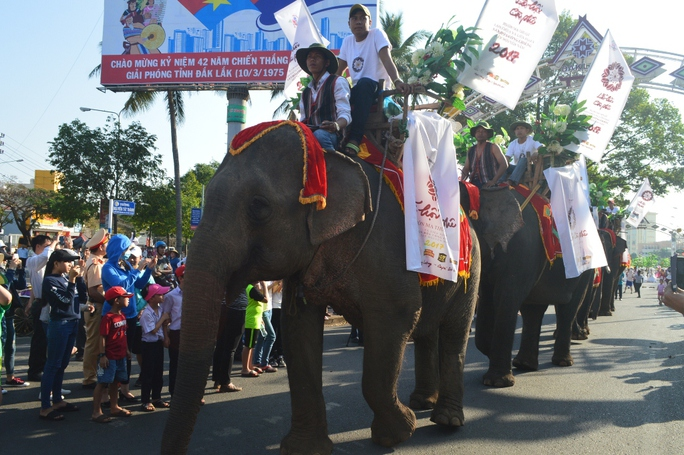 Những chú voi thân thiện nét đặc trưng của Đắk Lắk vào hội