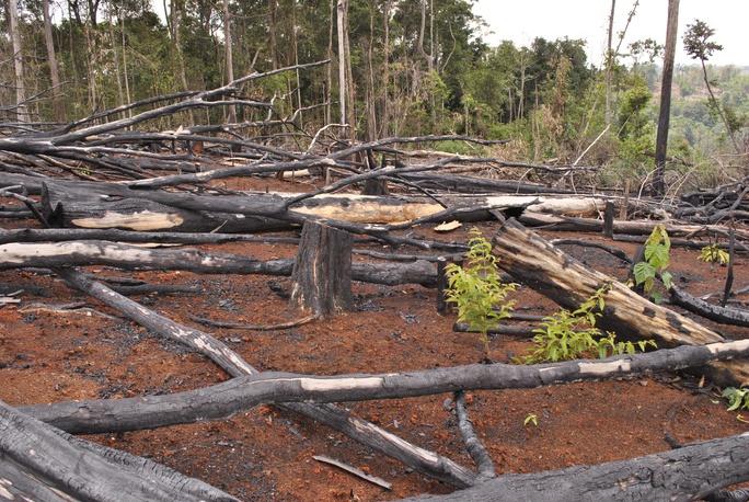 Nhiều cánh rừng nguyên sinh ở Đắk Nông bị tàn phá do các công ty lâm nghiệp buông lỏng quản lý
