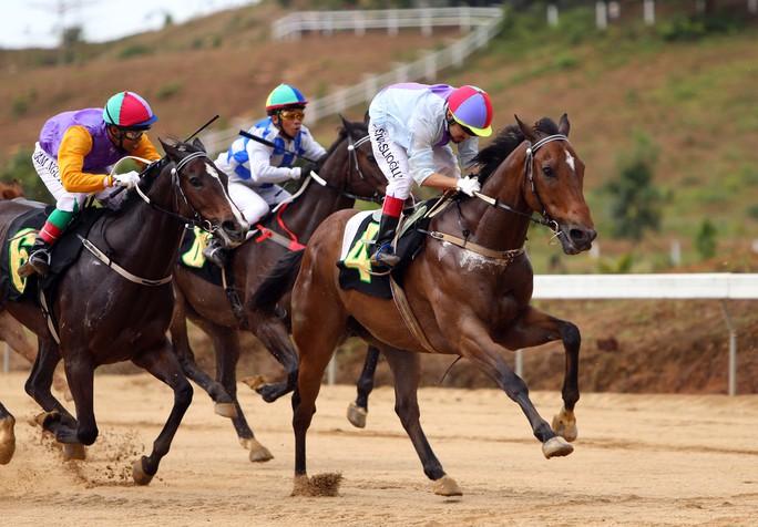Các chú ngựa tung sức trên đường đua