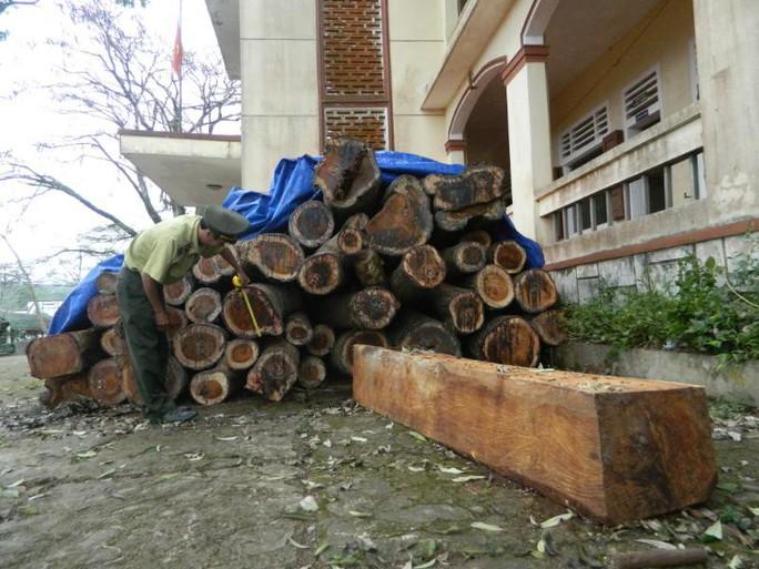 Khó hiểu chuyện mất gỗ ở rừng ma - Ảnh 1.