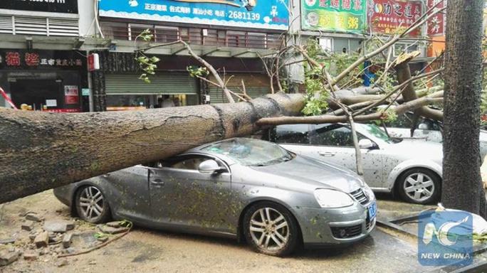 Chết kẹt trong bãi giữ xe vì bão Hato - Ảnh 6.