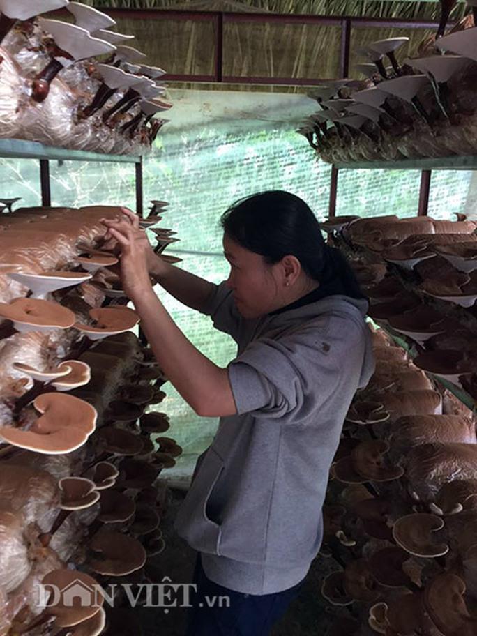Chị Nguyễn Thị Hiếu (sinh năm 1984), chủ trang trại nấm Linh chi Đất Thép
