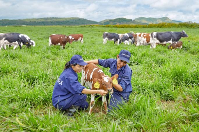 Bò organic ở trang trại như ở… khách sạn! - Ảnh 1.