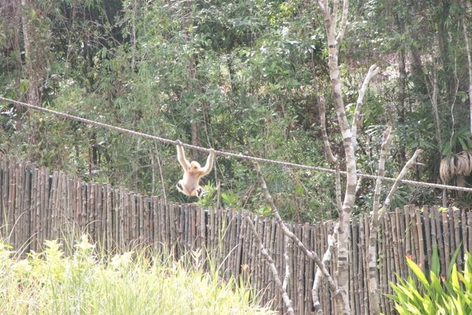 Mãn nhãn với màn biễu diễn thú ở Safari Phú Quốc - Ảnh 10.