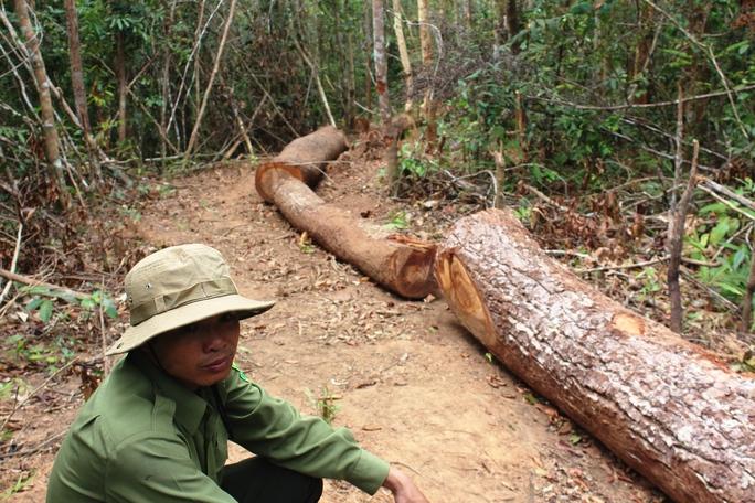 Một phần số gỗ còn lại tại hiện trường