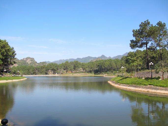Rừng thông Bản Áng (huyện Mộc Châu, Sơn La) được bảo tồn rất tốt. Ảnh: Phạm Dũng