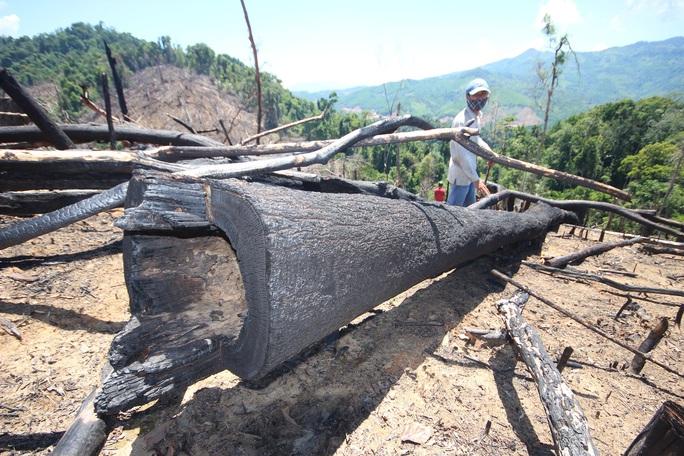 Phát hiện 10 vụ phá rừng nhưng chỉ có 1 vụ tìm ra thủ phạm - Ảnh 1.