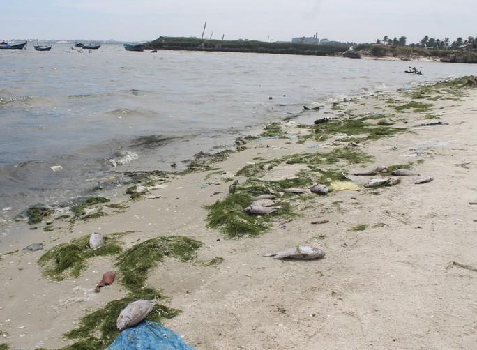 Cá tự nhiên chết hàng loạt, dạt vào bờ cách nhà máy đường không xa