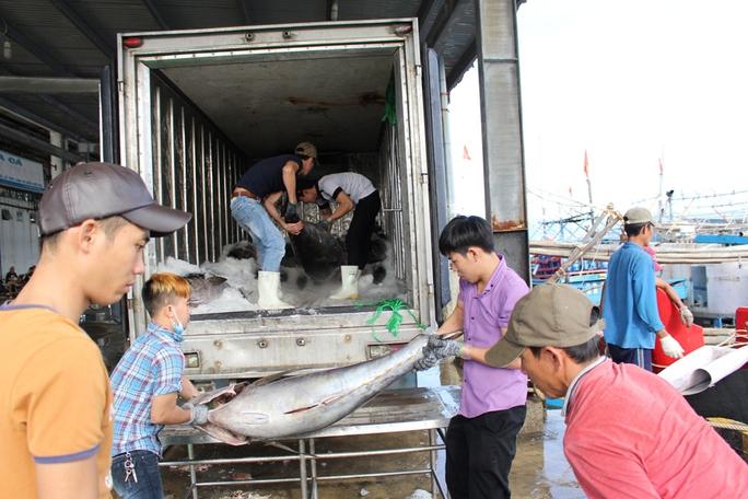 Thương lái đem xe đông lạnh thu mua ngay tại cảng