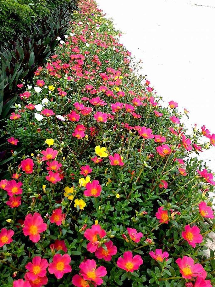 Ngỡ ngàng những con đường hoa rực rỡ làng quê miền Bắc - Ảnh 38.