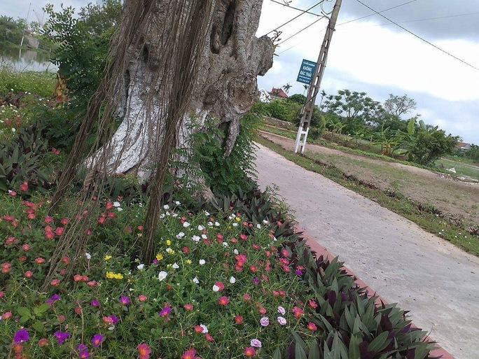 Ngỡ ngàng những con đường hoa rực rỡ làng quê miền Bắc - Ảnh 27.