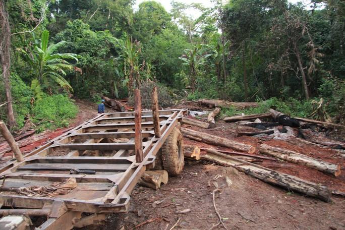 Cận cảnh công trường khai thác gỗ lậu khủng ở Đắk Lắk - Ảnh 6.