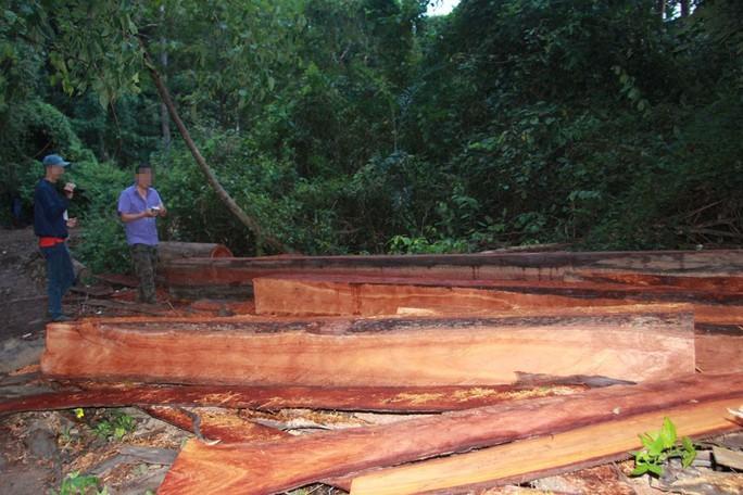 Cận cảnh công trường khai thác gỗ lậu khủng ở Đắk Lắk - Ảnh 2.