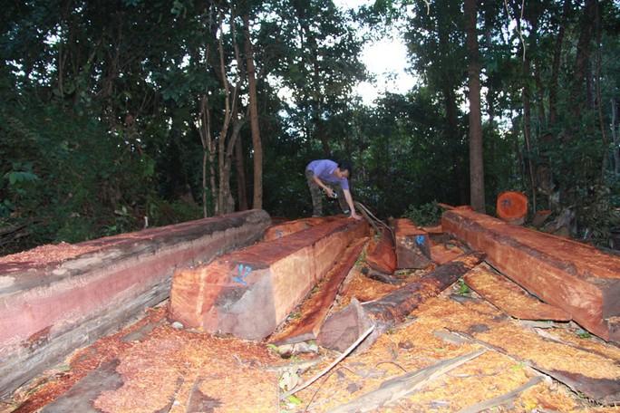 Cận cảnh công trường khai thác gỗ lậu khủng ở Đắk Lắk - Ảnh 5.