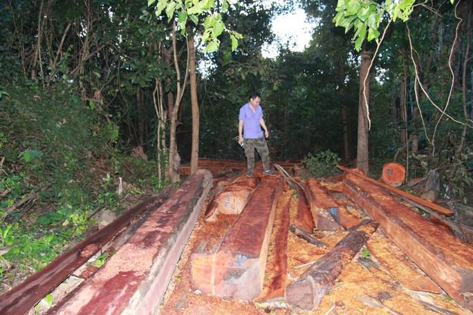 Cận cảnh công trường khai thác gỗ lậu khủng ở Đắk Lắk - Ảnh 1.