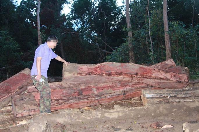 Cận cảnh công trường khai thác gỗ lậu khủng ở Đắk Lắk - Ảnh 9.
